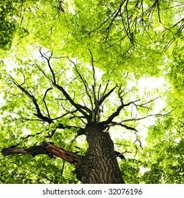 Spring Tree Leaves
