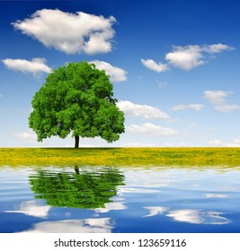 Spring tree on dandelions field mirrored on water level