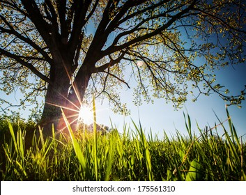Spring tree on the green lush meadow at sunny day