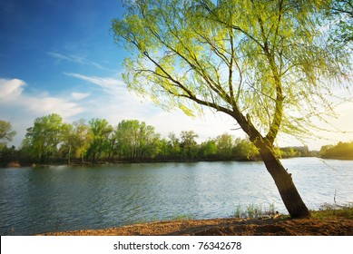 Spring tree on river. Nature composition.