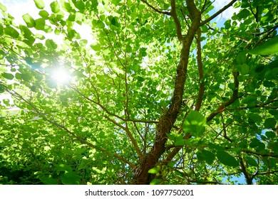 spring tree in park