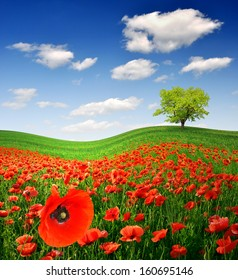 spring tree with red poppy field