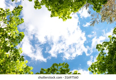 Spring trees and blue sky background.