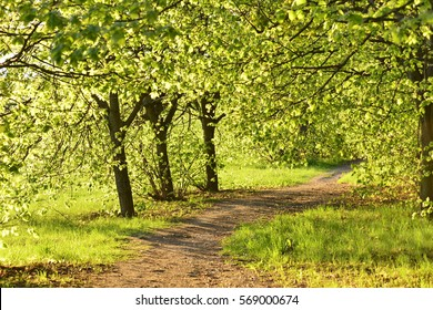 Spring Trees Images Stock Photos Vectors Shutterstock