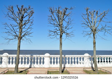 Spring trees on the observation deck in the Peterhof park - Russia.