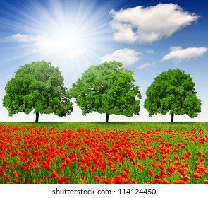 spring trees  with red poppy