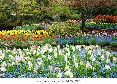 Spring tulip field in butchart gardens, vancouver island, british columbia, canada