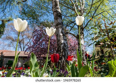 Spring and tulips in the city