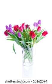 Spring tulips isolated on a white background