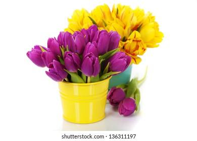 spring tulips on white background
