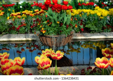 spring tulips and reflecting pond. vibrant yellows, oranges and reds