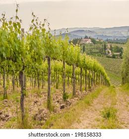 Spring Tuscan vineyards around San Gimignano, Italy