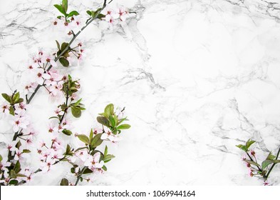 spring twigs of cherry blossom on a marble table