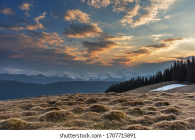 Spring in the Ukrainian Carpathian mountains on the Kostrich mountain valley, with fantastic fogs, clouds and flowering crocuses overlooking the high snow-capped peaks of the mountains.