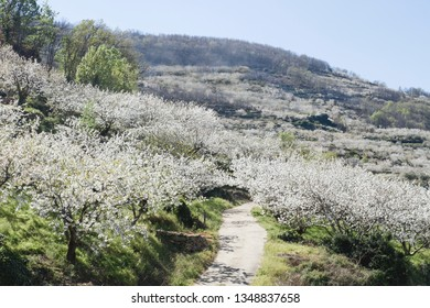 Spring in valle del Jerte