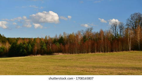 Spring view of forest and meadow, southern Bohemia,  Czech Republic