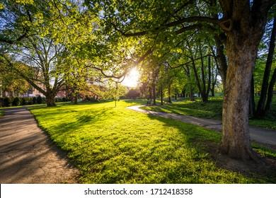 Spring view in Letna Park, Prague, Czech Republic. Spring in Prague (Praha), beautiful Letna park (Letenske sady) in sunlight, sunny landscape, popular tourist destination, Prague, Czech Republic - Shutterstock ID 1712418358