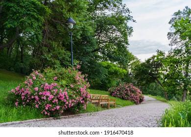 Spring view in Letna Park, Prague, Czech Republic. Spring in Praha , beautiful Letna park Letenske sady in sunlight, sunny landscape, popular tourist destination, Prague, Czech Republic - Shutterstock ID 1916470418