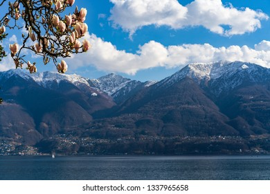 Spring view on swiss alps with magnolia flowers in Locarno