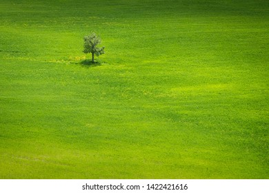 Spring view on the tree in italian field