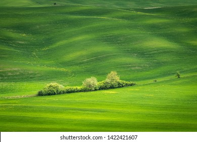 Spring view of typical Italian field