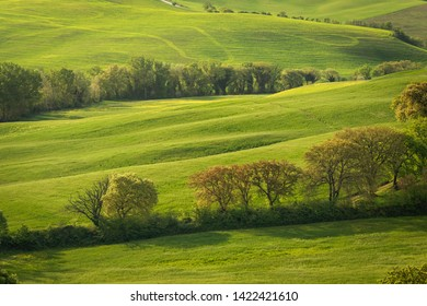Spring view of typical Italian field at the morning with sunligh