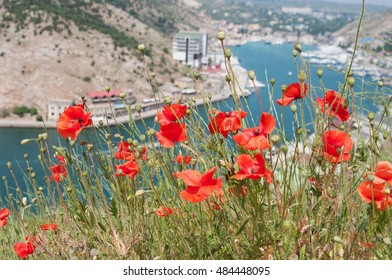 spring views of Balaklava bay, Crimea, blooming poppies in foreground, local focus, shallow DOF