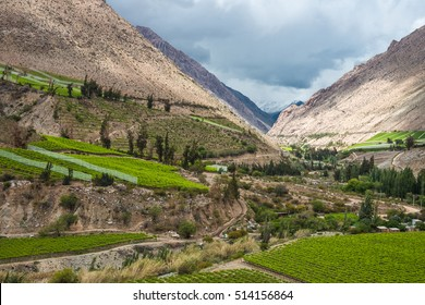Spring Vineyard. Elqui Valley, Andes part of Atacama Desert in the Coquimbo region, Chile