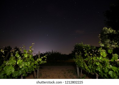 Spring vineyards by night Fontanars dels Alforins Valencian community Spain