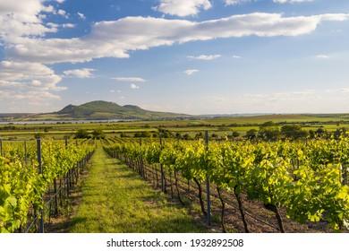 Spring vineyards under Palava near Sonberk, South Moravia, Czech Republic - Shutterstock ID 1932892508
