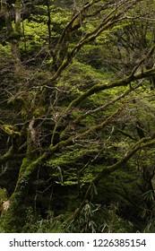 Spring of virgin forest