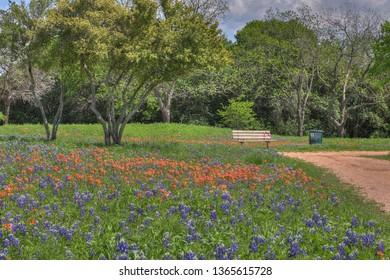 Spring in Waco Texas!