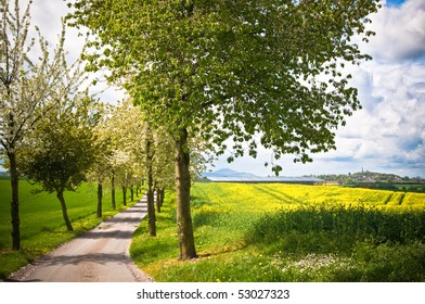 Spring walkway with tree lined lane through country fields