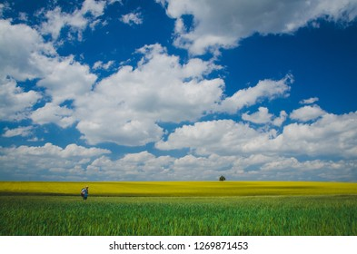 Spring wallpaper, blue sky and yellow colza field