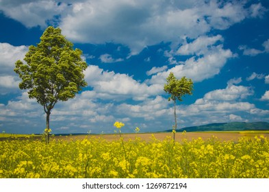 Spring wallpaper, trees, blue sky and yellow colza field