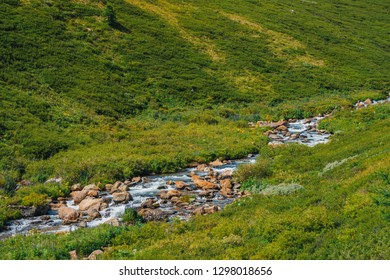 Spring water fast stream near green mountainside in sunny day. Rich highland flora. Amazing mountainous vegetation near fast mountain creek. Wonderful scenic landscape. Sunny picturesque scenery.