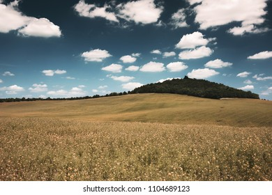 Spring waves hills landscape of colorful fields and beautiful sky