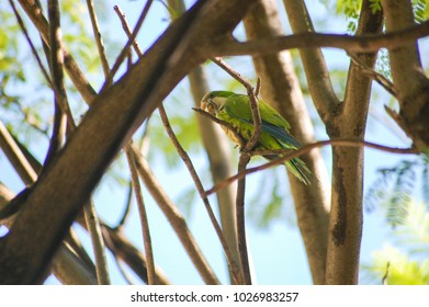spring weather, a bright bird sits on a branch of a tree