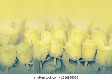 Spring white roses with green grass, flat lay, color inversion toned, top view
