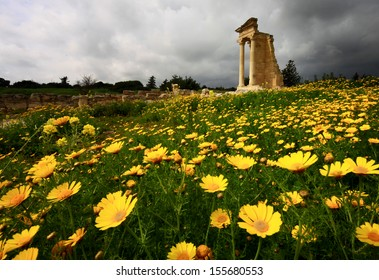 Spring wild flowers bloom at the Sanctuary and temple of Apollo Hylates near Kourion Cyprus.