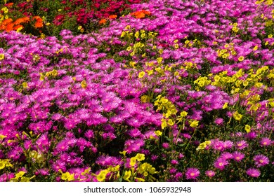 Spring wild flowers under the sun with nobody
