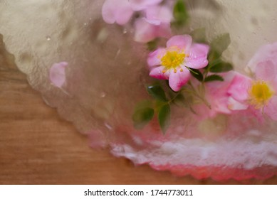 Spring wild rose flower with water drops on petals