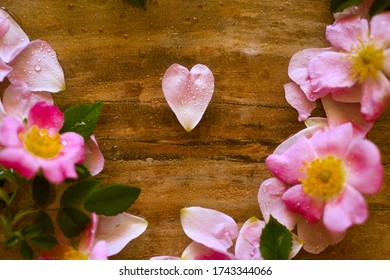 Spring wild rose heart-shape petal surrounded by other flowers with water drops on them, floral background