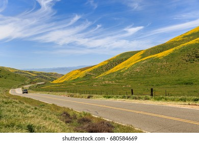 Spring wildflowers along Carrisa highway in California, April 2017