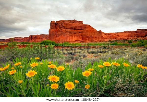 Spring wildflowers in Arches, Moab, Utah, USA.