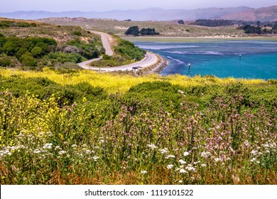 Spring wildflowers near Bodega Head Trail above Campbell Cove and curving Westshore Road in Sonoma Coast State Park, for themes of nature and ecotourism