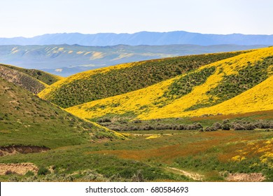 Spring wildflowers near Carrizo Plain National Monument, California, April 2017