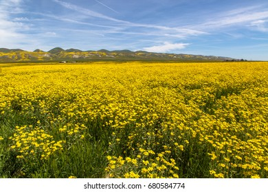 Spring wildflowers near Carrizo Plain National Monument, California, April 2017