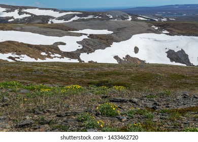 Spring wildflowers and snowcapped mountains in Nome Alaska.