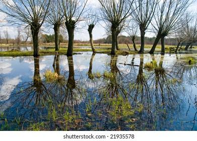 Spring willows. Kampinos National Park (Kampinoski Park Narodowy), Mazovia, Poland.